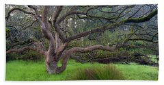 A Tree In The Park  Beach Towel by Catherine Lau