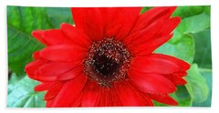 Beach Sheet featuring the photograph A True Red by Sandi OReilly