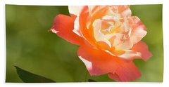 Beach Towel featuring the photograph A Well Lighted Rose by AJ Schibig