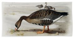 A White Fronted Goose Beach Towel