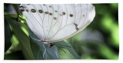 A White Morpho Butterfly  Beach Towel