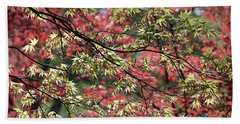Acer Leaves In Spring Beach Towel