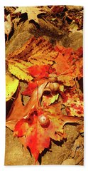 Beach Towel featuring the photograph Acorns Fall Maple Leaf by Meta Gatschenberger