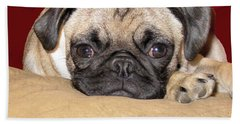 Adorable Icuddle Pug Puppy Beach Towel