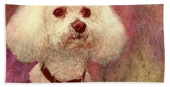 Adoration - Portrait Of A Bichon Frise  Beach Towel