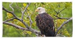 Adult Bald Eagle Beach Towel