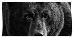 Beach Towel featuring the photograph Adult Male Black Bear by Coby Cooper