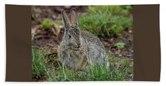Adult Rabbit Grazing Beach Towel