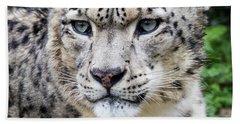 Adult Snow Leopard Portrait Beach Sheet