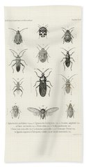 African Bugs And Insects Beach Towel