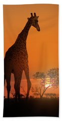 African Giraffe Walking At Sunset Beach Towel