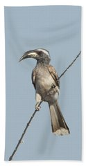 African Grey Hornbill Tockus Nasutus Beach Towel by Panoramic Images
