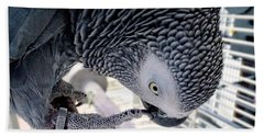 African Grey Parrot Beach Towel by Melissa Messick