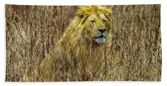 African Lion In Camouflage Beach Sheet