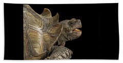 African Spurred Tortoise Beach Towel