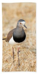 African Wattled Lapwing Vanellus Beach Towel by Panoramic Images
