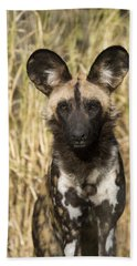 Beach Towel featuring the photograph African Wild Dog Okavango Delta Botswana by Suzi Eszterhas