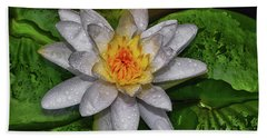 Beach Sheet featuring the photograph After The Rain - Water Lily 003 by George Bostian