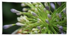 Agapanthus, The Spider Flower Beach Sheet by Yoel Koskas