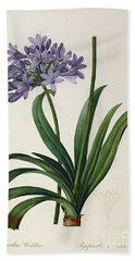 Agapanthus Umbrellatus Beach Sheet by Pierre Redoute