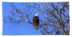 Alaskan Bald Eagle In Tree At Sunset Beach Towel