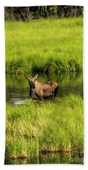 Alaskan Moose Beach Towel