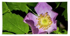 Beach Towel featuring the photograph Alberta Wild Rose Opens For Early Sun by Darcy Michaelchuk