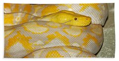 Albino Reticulated Python Beach Towel