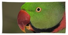 Beach Towel featuring the photograph Alexandrine Parakeet by JT Lewis