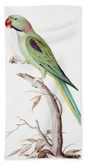 Alexandrine Parakeet Beach Sheet by Nicolas Robert