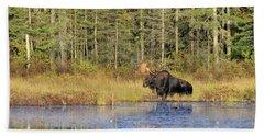 Algonquin Bull Moose Beach Towel