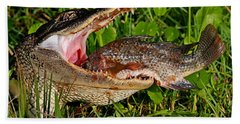 Alligator Eating Fish Beach Sheet