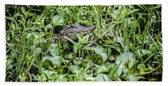Alligator In Duck Weed, Louisiana Beach Towel