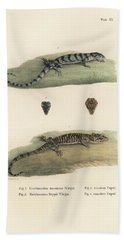 Alligator Lizards Beach Towel