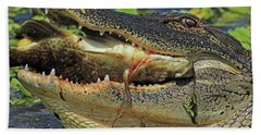 Alligator With Tilapia Beach Towel