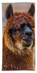 Alpaca Close-up On Utah Farm Beach Sheet by Gary Whitton