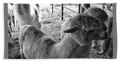 Alpaca Meeting  Beach Towel