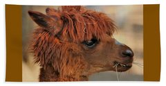 Alpaca Portrait Beach Sheet by Sheila Brown