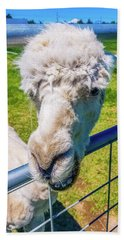 Alpaca Yeah Beach Towel