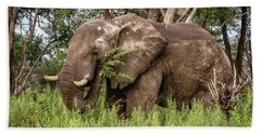 Alpha Male Elephant Beach Towel