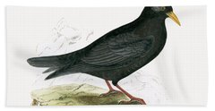 Alpine Chough Beach Sheet by English School