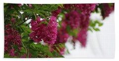 Amaranth Pink Flowering Locust Tree In Spring Rain Beach Sheet