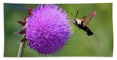 Beach Sheet featuring the photograph Amazing Insects - Hummingbird Moth by Kerri Farley