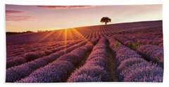Amazing Lavender Field At Sunset Beach Sheet