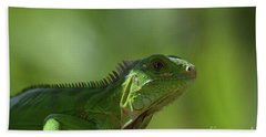 Amazing Look At A Common Iguana Beach Sheet by DejaVu Designs