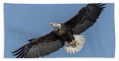 Beach Towel featuring the photograph American Bald Eagle 2017-18 by Thomas Young
