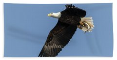 American Bald Eagle 2017-4 Beach Towel