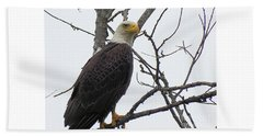 American Bald Eagle Pictures Beach Towel