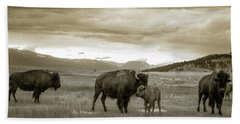 Beach Towel featuring the photograph American Bison Calf And Cow by Chris Bordeleau