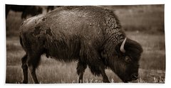 Beach Towel featuring the photograph American Buffalo Grazing by Chris Bordeleau